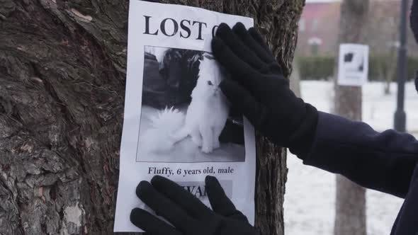 Female Hands in Winter Gloves Hanging Missing Cat Ad on the Tree, Female Pet Owner