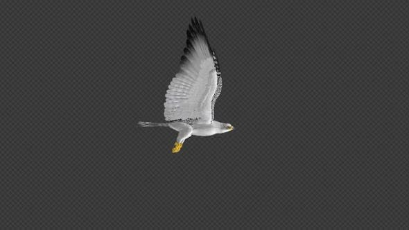 Thumbnail for Arctic Gyrfalcon - 4K Flying Loop - Side View
