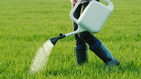 Cover Image for Man Watering Green Grass From a Sprinkler