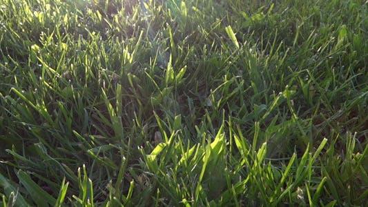Thumbnail for Gras bei der Sonne - 06
