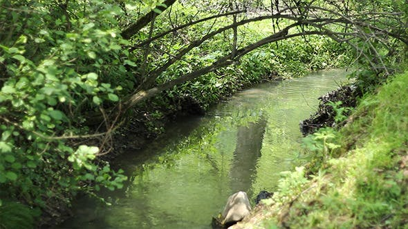 Arched Branch Over Tiny River