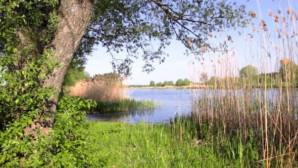 Summer Riverbank