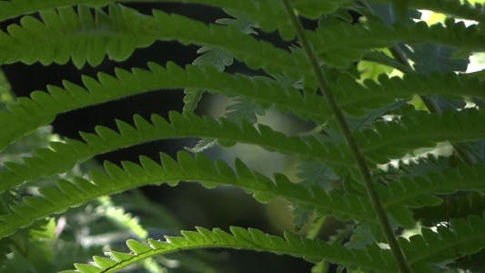 Thumbnail for Fern In Forest - 10