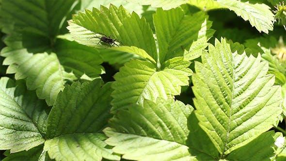 Thumbnail for Spider on Leaf