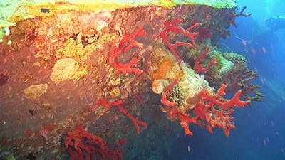 Shipwreck on the Seabed 663