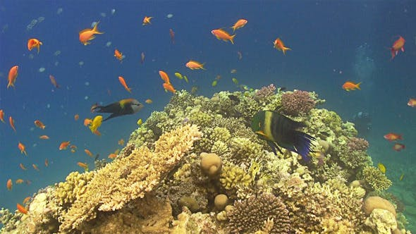 Colorful Fish on Vibrant Coral Reef 674