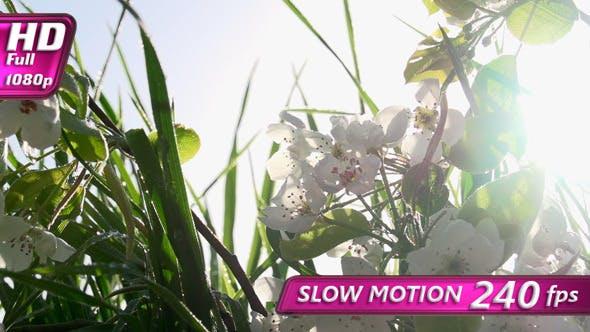 Thumbnail for Flowering Branch on Grass