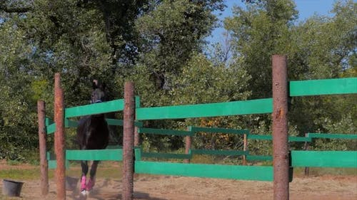 Junger Hengst, elegantes Vollblut Pferd