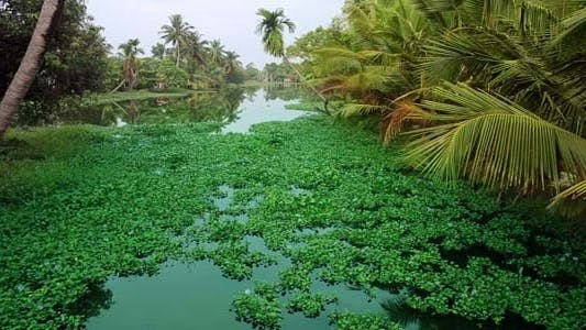 Thumbnail for Picturesque Scene In Kerala Backwaters