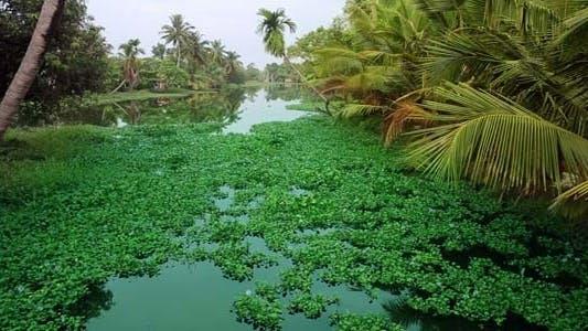 Thumbnail for Malerische Szene in Kerala Backwaters