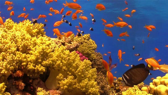 Thumbnail for Colorful Fish on Vibrant Coral Reef 707