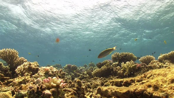 Thumbnail for Waves of the Sea Over the Coral Reef 738