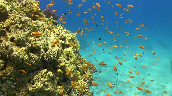 Thumbnail for Tropical Fish on Vibrant Coral Reef 756
