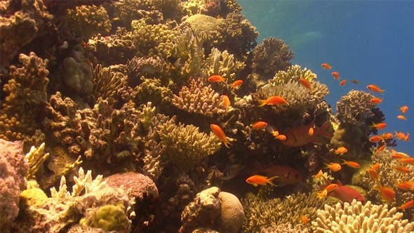 Thumbnail for Colorful Fish on Vibrant Coral Reef 761