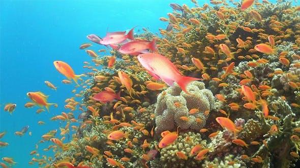 Poisson tropical sur un récif corallien vibrant 768