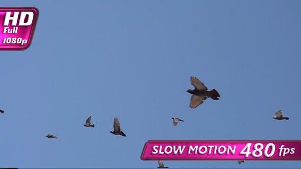 Thumbnail for Flock of Birds