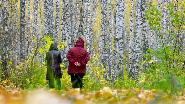 Thumbnail for Old Women in Jackets Walk Among Birch White Trunks Back View