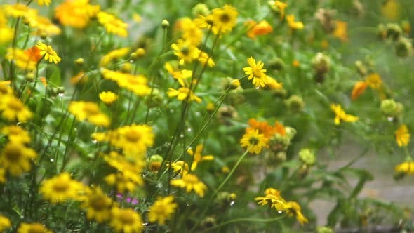 Thumbnail for Rain In The Garden