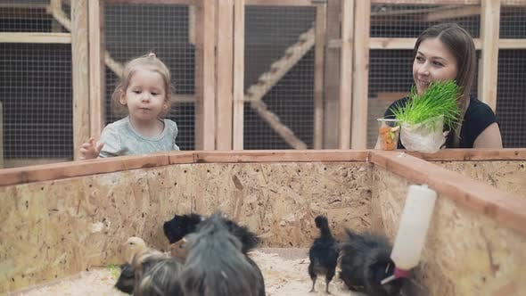 Thumbnail for Young Beautiful Mother with Little Daughter Is Feed Guinea Pigs and Chicks