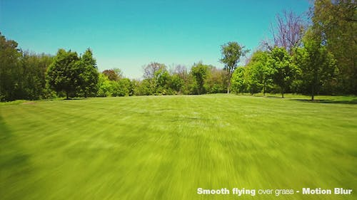 Smooth Flying Over Green Grass and Forest