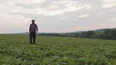 Attractive Man Walks Between Green Field
