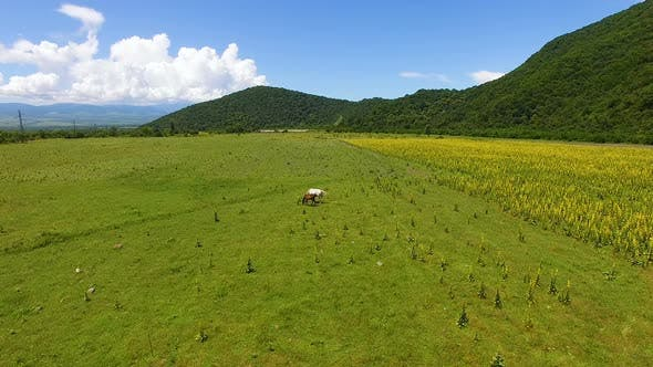 Thumbnail for Aerial view of two beautiful horses grazing on field, eating fresh green grass