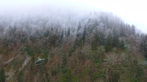 Thumbnail for Hoarfrost Dew Formation in Cloud