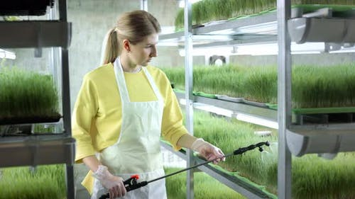 Entrepreneur in the Greenhouse Takes Care of the Plants