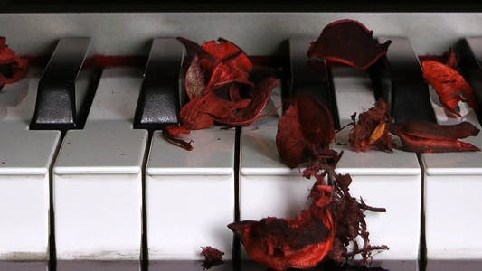 Thumbnail for Dry Rose Leaves on Piano