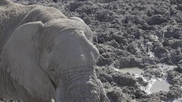 Thumbnail for Elephant at a Muddy Waterhole