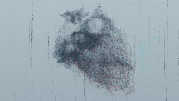 Human Heart X-Ray