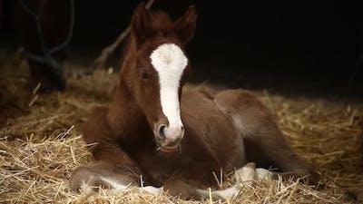 Colt, baby horse