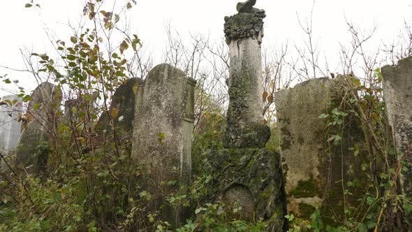 Old tombstones in a cemetery