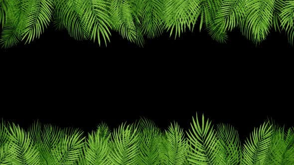 Palm Leaves 03 HD