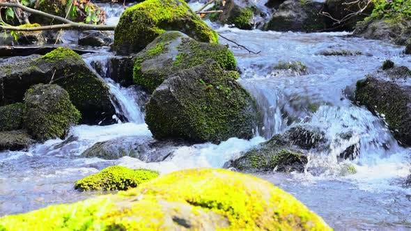 a Panning Movement Creek