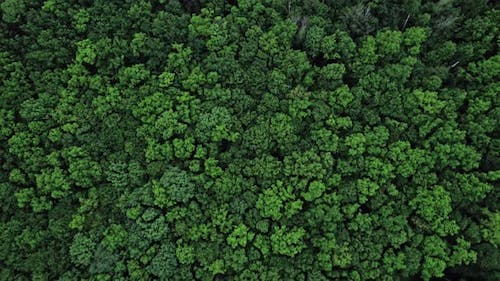 Top Down View of Autumn Forest