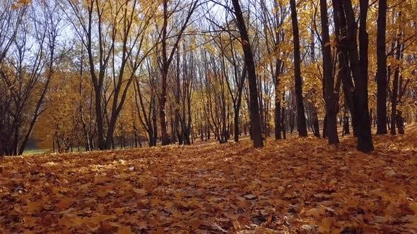Thumbnail for Autumn Garden in the City Park, Sunny Day.