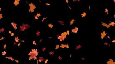 Maple Leaves 01 Hd
