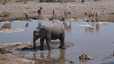 Family of elephants walking at watering place.