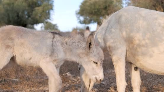 Thumbnail for A young donkey with mom in the countryside