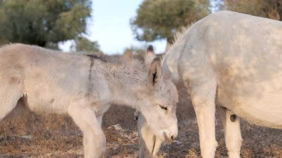 A young donkey with mom in the countryside