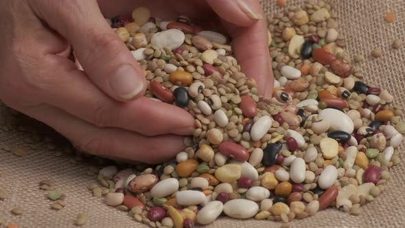 Organic Agriculture Mixed Beans Legumes