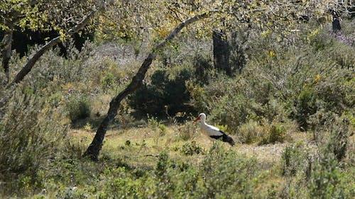 Stork in Preserve