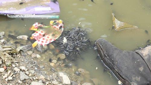 Pollution Creatures