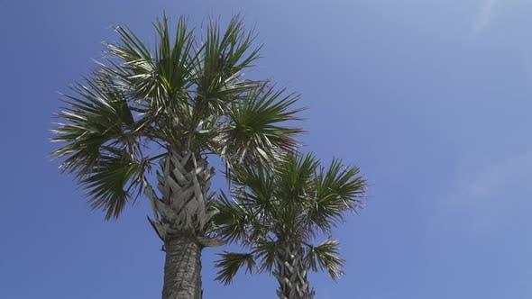 Thumbnail for East Florida Beach