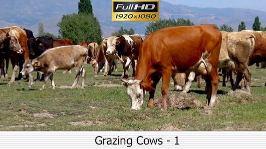 Thumbnail for Grazing