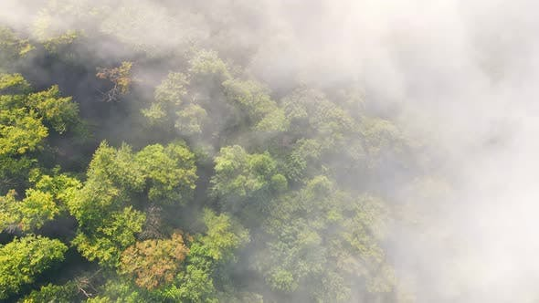 Thumbnail for Morning Fabulous Fog That Covers the Mountains. Aerial Top View of Green Trees