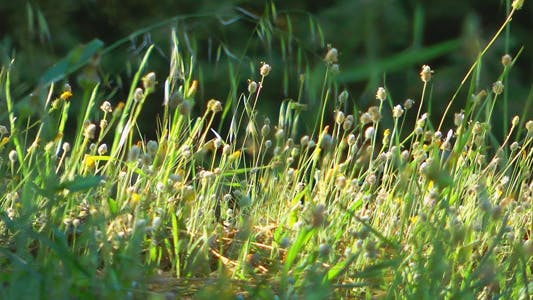 Thumbnail for Flowers 4