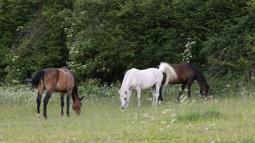 herd of horses grazing in a spring meadow