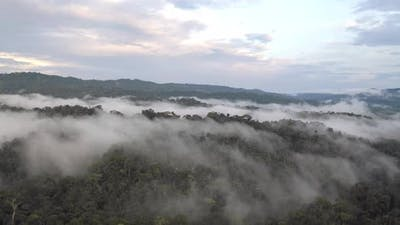 Aerial view of a tropical forest covered in fog after heavy rainfall